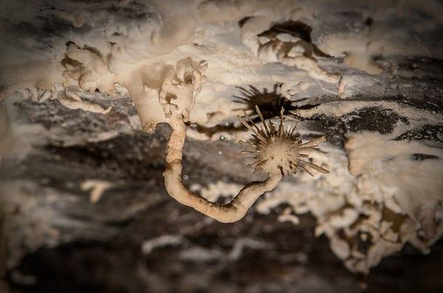 """Este Bizarre """"aragonita Flor"""" Cresce nos tetos de cavernas úmidas"""