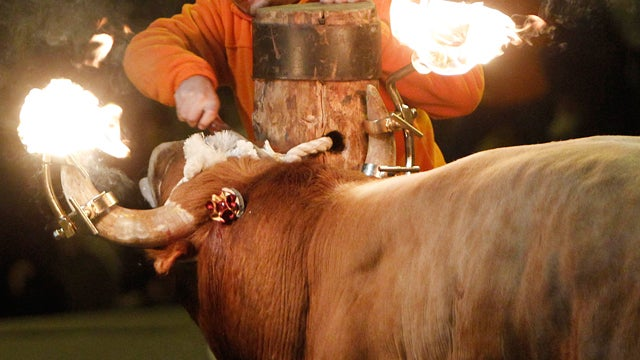 Bull with Flaming Wax on Horns Kills Man, Reminds Us Not to Put Flaming Wax on Bulls