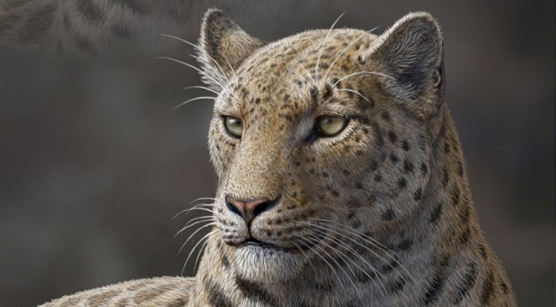 Found: The Oldest Big Cat Fossil