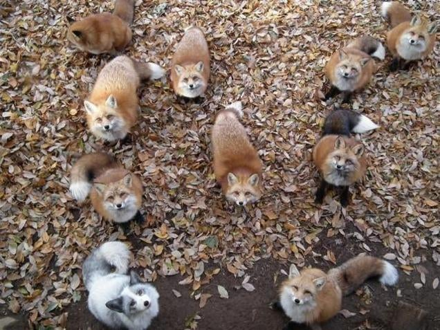 You Can Experience Fox Heaven in Japan
