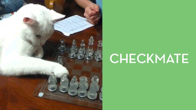 Cat Has Developed The Perfect Chess Game