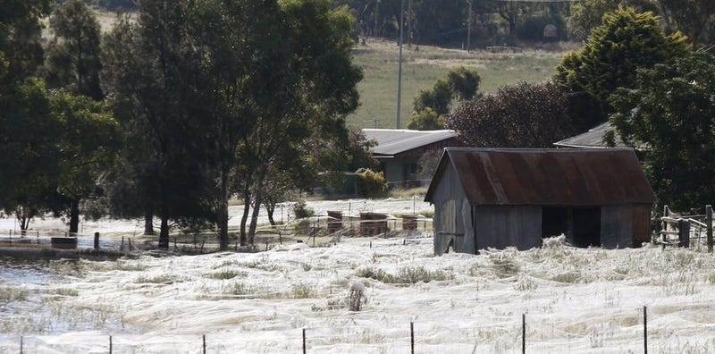 Massive spiderwebs engulf Australian town as arachnids escape floods
