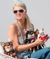 Paris Hilton Pet Cruelty Prevented