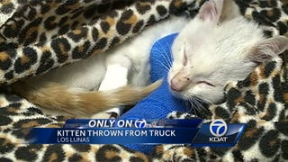 ​New Mexico Asshole Throws 8-Week-Old Kitten Against Brick Wall