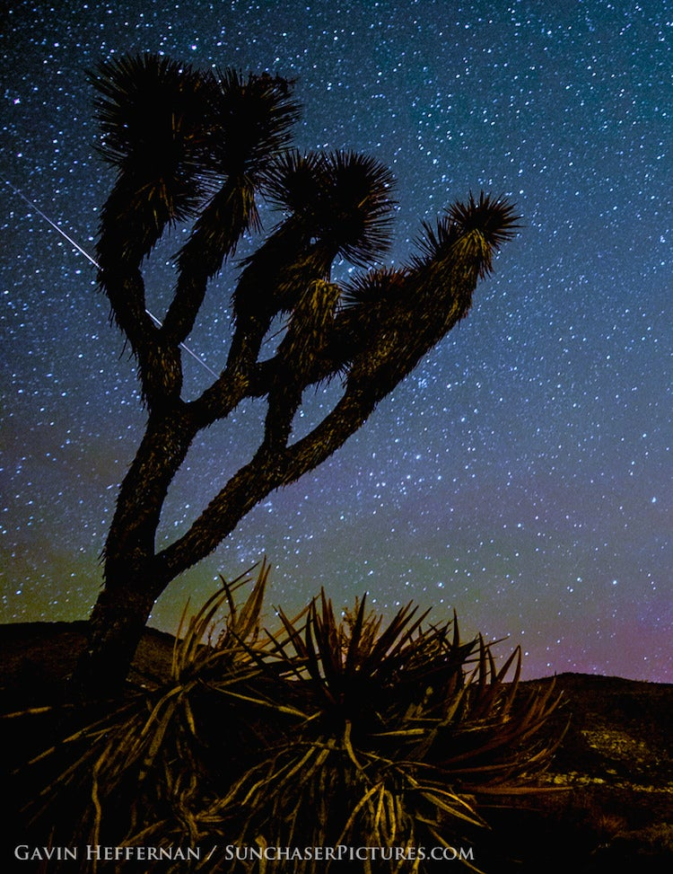 Camelopardalids over Joshua Trees