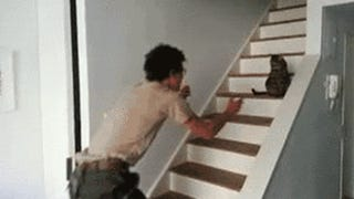 A macska tesz rá, hogy éppen hazajöttél a háborúból