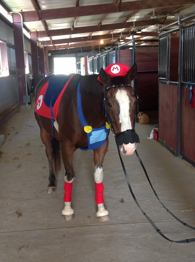 Sad Horse Is Dressed As Mario