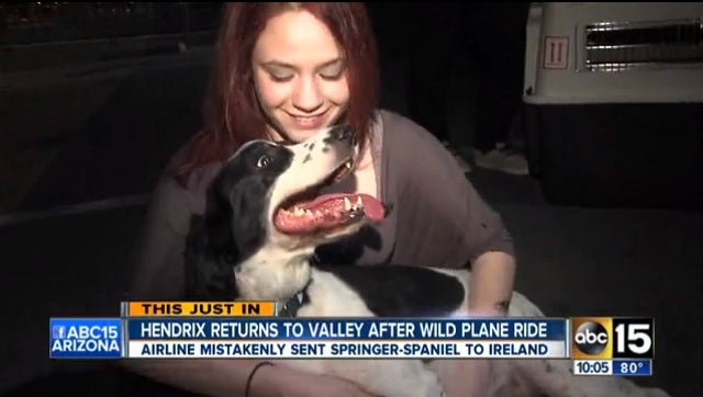 United Airlines Accidentally Sends Phoenix-Bound Dog to Ireland