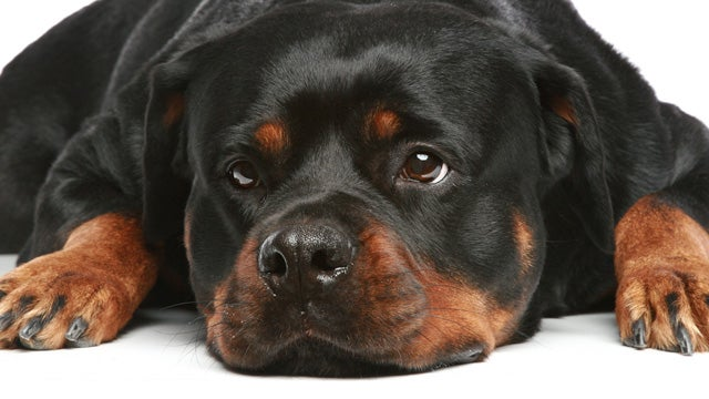 Man Burns Down House Trying to Cremate His Rottweiler