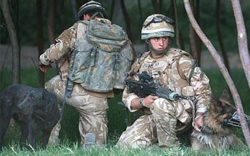 British Doggie Paratroopers to Make High-Altitude Jumps With Cameras Attached To Their Heads