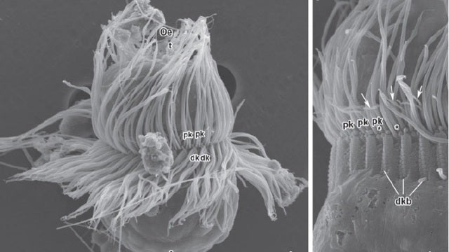 Is this bizarre organism an animal, a plant, or both?