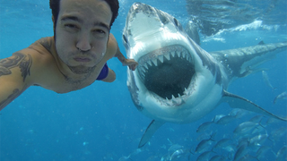 Fake Shark Attack Selfie Tries, Fails to Kill Fall Out Boy