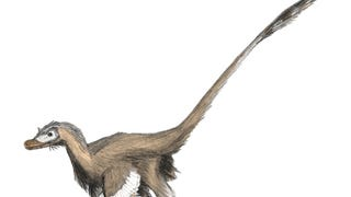 Let's Try to Settle This -- Are Birds Dinosaurs?