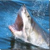 Shark Season Has Begun