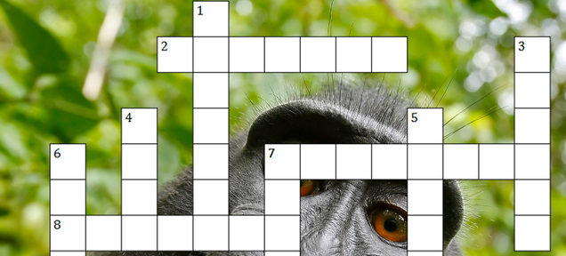 Here's a Festive Crossword Puzzle About 2014's IP and Copyright News