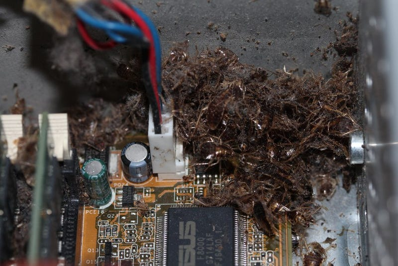 Computer Becomes Cockroach Mass Grave + Nightmare Fuel