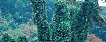 Identify invasive plants