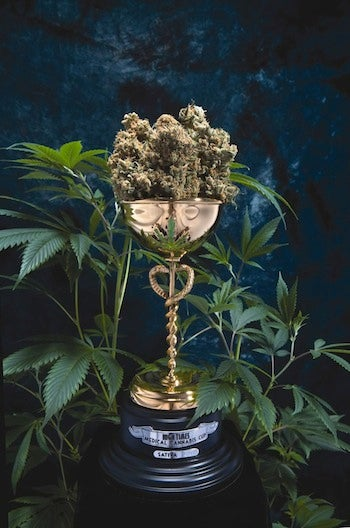 The Stoner Channel: Captain Picard Does Hamlet, High Times Picks a Winner, and Quick Cure Builds a Better Bud Rack