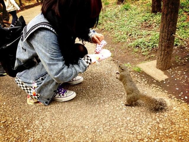 Inside Japan's Squirrel Gardens. Yes, Squirrel Gardens!