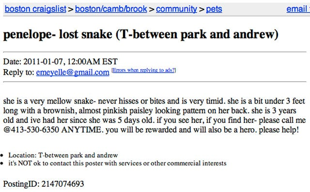 Lost Boa Constrictor May Still Be on the Subway