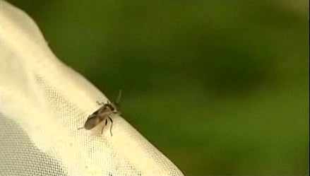 Has a New Species of Insect Appeared in the Middle of London?