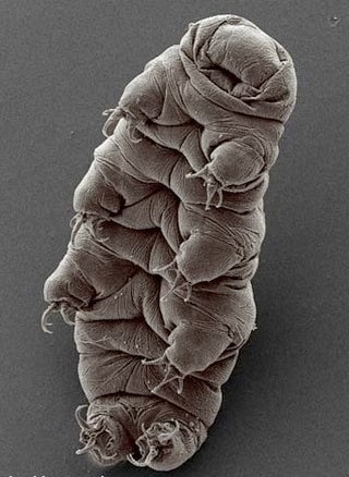 Extremophiles I Have Known And Loved