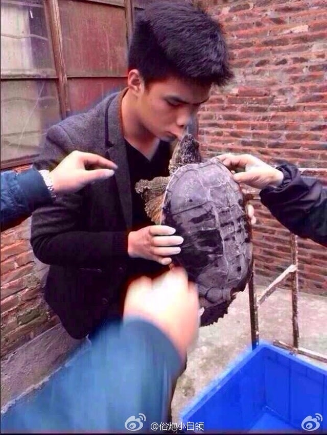 Why You Shouldn't Kiss a Snapping Turtle