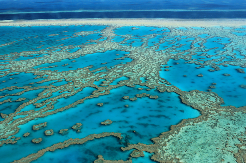 Indian company wants to kill Nemo and destroy the Great Barrier Reef