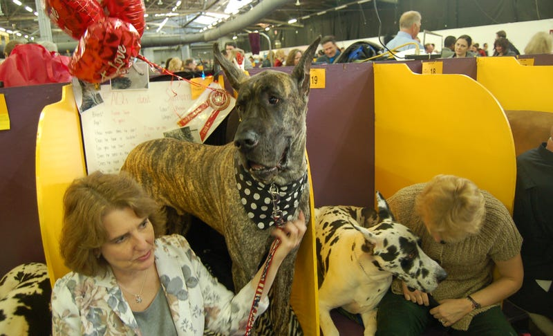 Here Are 2,000 Photos We Took At The Westminster Dog Show