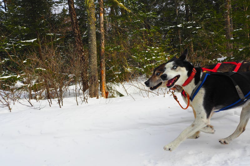 Where the Dogs Are: A Dogsledding Photo Diary