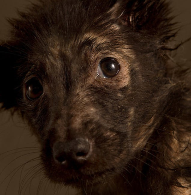 Portraits of abandoned dogs before being put down at a shelter