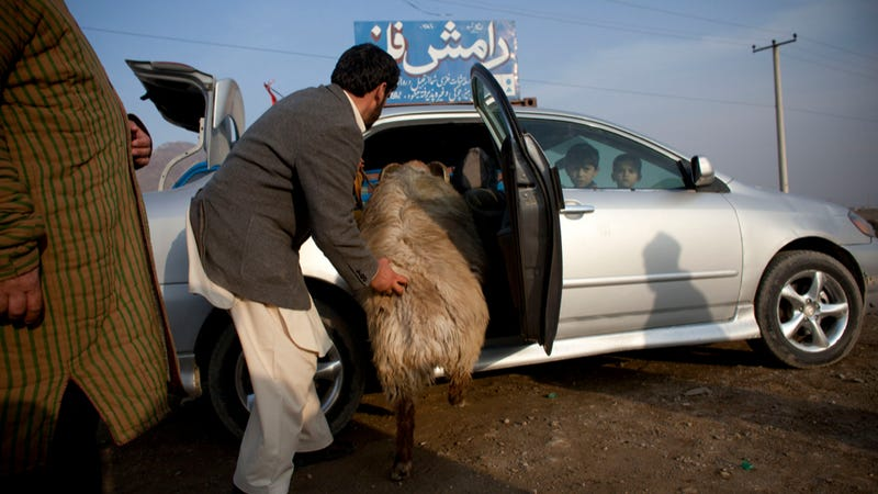 Why The Next Car You Wreck Might End Up In Afghanistan