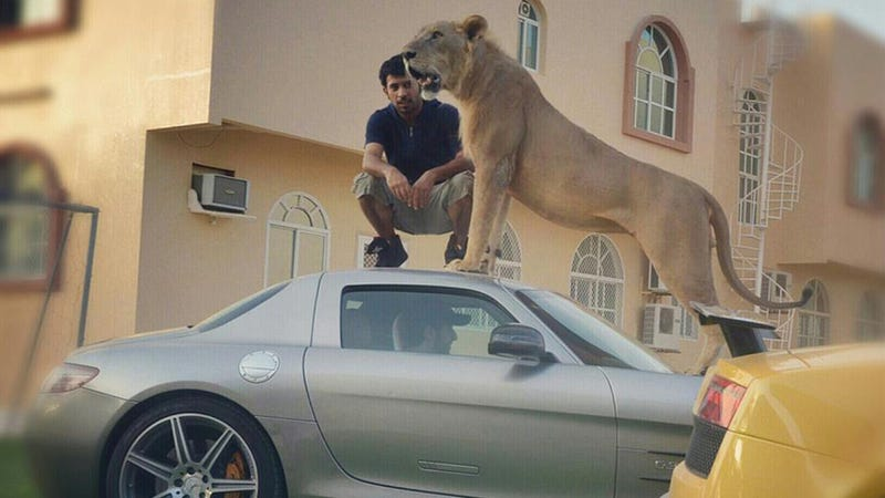 Lion On A Mercedes SLS AMG! Lion On A Mercedes SLS AMG!