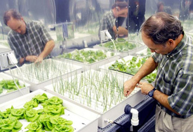Spam, Silkworms, Hydroponics: The Speculative Future of Food on Mars