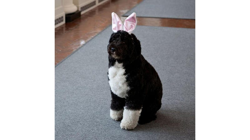 Poor Bo Obama, Humiliated on Easter