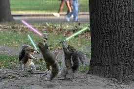 Down the Internet Squirrel Hole