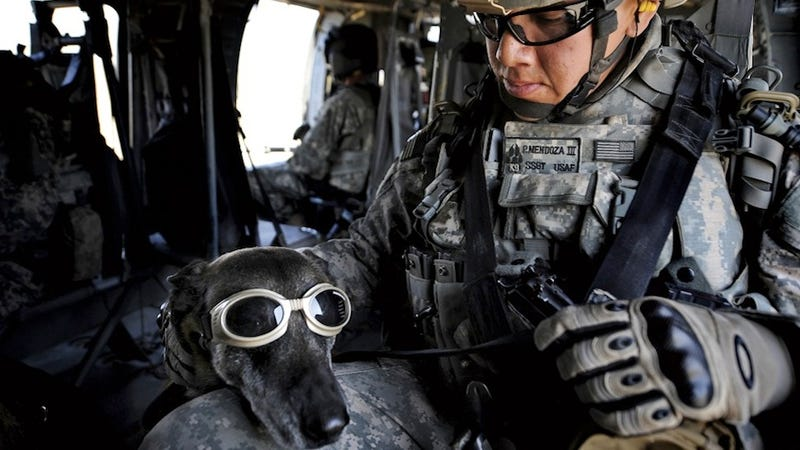 SEAL Team 6 Wants Special Remote Cameras for War Dogs