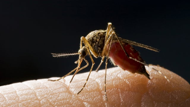 How scientists will win the war against malarial mosquitoes