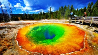 Groupthink is like Yellowstone Park