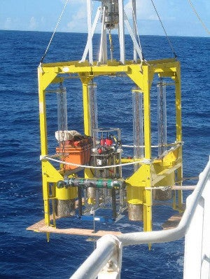 """The deepest part of the ocean is """"teeming"""" with microbes"""