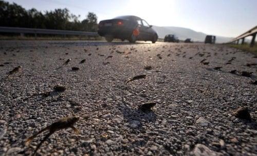 Flood Of Frogs Shuts Down Greek Highway