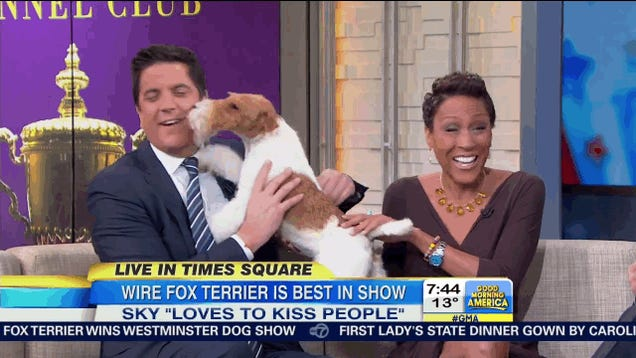 Best In Show Winner Gets Frisky With The Good Morning America Crew