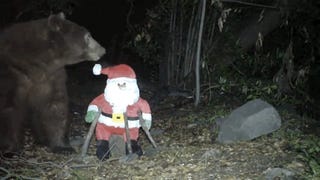 Get Your Christmas Crap The Fuck Out Of This Bear's Face, Please