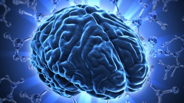 Doubling our genes gave humans bigger brains