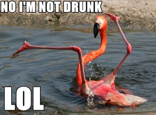 In Breaking Booze News, Birds Are Totally Down to Party