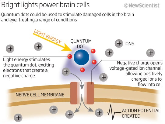 For the first time ever, scientists can control human brain cells using quantum dots