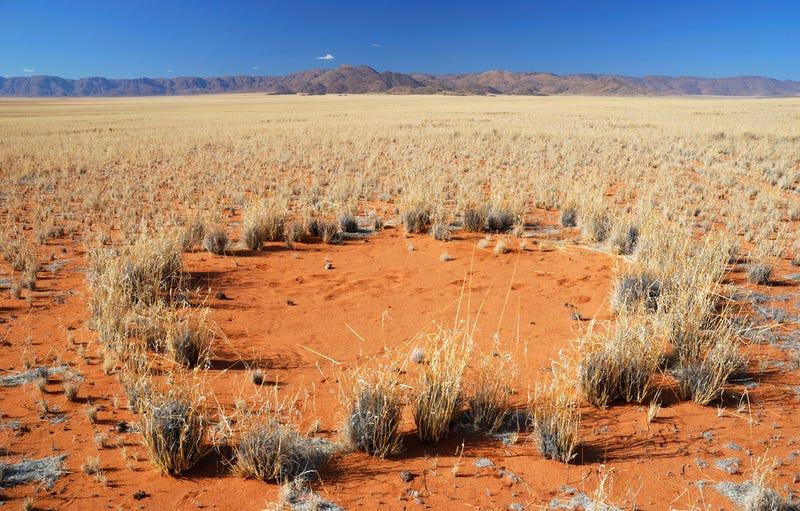 Científicos por fin hallan una explicación a los misteriosos círculos de las hadas