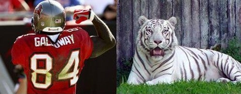 Joey Galloway Is The White Tiger
