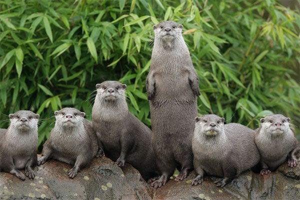 Otter Up!