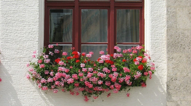 Why Plants in Your Window Box Should Be in Separate Pots